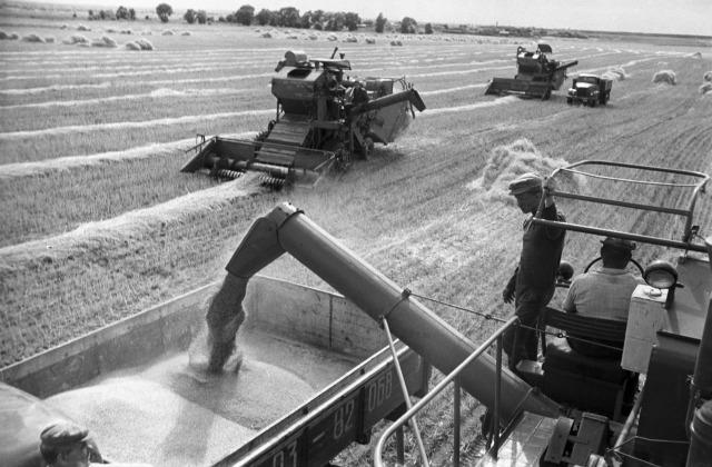 Иллюстративное фото. Уборка урожая на целине, конец 60-х годов