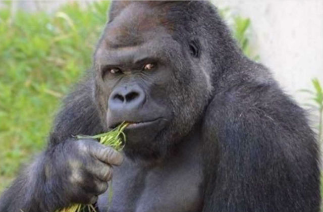 Читать про секс женщины и гориллы фото 316-757