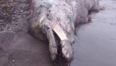 Выяснилось, кому принадлежат останки «сахалинского чудовища»