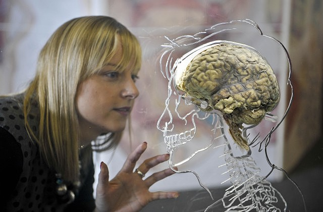 Ученые: мозг человека развивается активно до30 лет