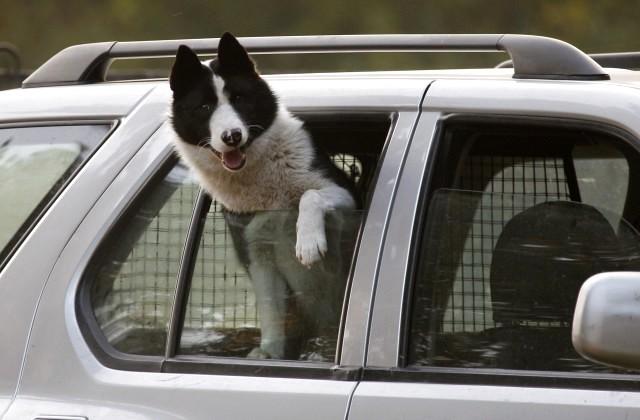 Как правильно сравнить возраст собаки счеловеческим, узнали ученые