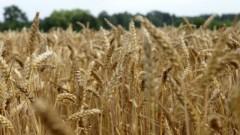 Фермеры: уборка урожая зерновых близится к концу