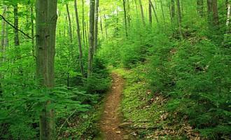 Полезные советы: как не заблудиться в лесу