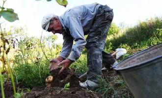 Правительство рассмотрит вопрос о сохранении субсидий для фермеров