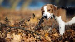 Начало ноября будет теплым, без существенных осадков