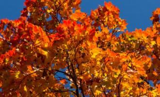 Октябрь на планете стал самым теплым за всю историю метеонаблюдений