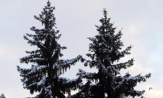 Ушаков завтра в Брюсселе зажжет рижскую Рождественскую ёлку