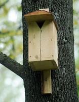 В Рижском зоосаде – ежегодные Дни птиц