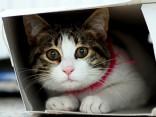 В Вентспилсе кота на год замуровали в стене?