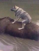 Уссурийск ушел под воду; в зоопарке тонут животные