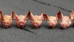 Голландцы приветствовали мигрантов свиными головами
