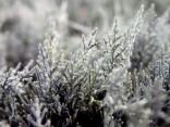 В субботу с утра в Латгале похолодает до -6 градусов