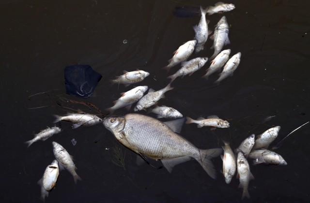 Террористы ДАИШ начали торговать рыбой иавтомобилями