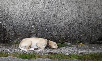 В Сеть попало шокирующее видео: по трассе тащат пристегнутую к авто собаку