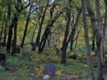Загадочная смерть парня и девушки в Гулбенском крае. Дело в страховке?
