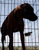 Россияне стали активнее есть собак и болеть