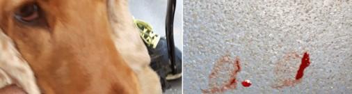 Зверское ЧП: В Слоке хозяин на велосипеде тащил собаку по асфальту