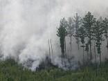 Дым от лесных пожаров в Сибири дошел до Латвии