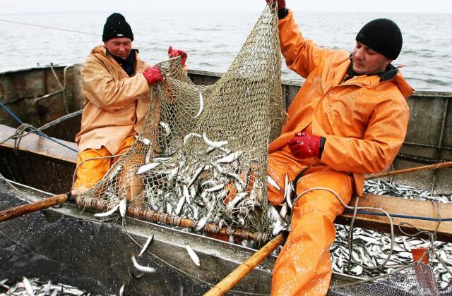 Вылов рыбы впервом полугодии увеличился на72,8%