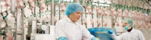 Без образования у куриного конвейера: без шансов на будущее