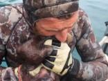 Дайвер из Новой Зеландии убил осьминога зубами