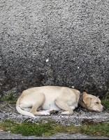 В Лиепае мужчина с собакой попал в смертельную ситуацию