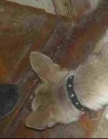 Мужчина выгуливал собаку раз в неделю: заведено дело