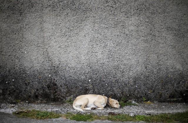 ВМахачкале здешние граждане отстреливают бродячих собак