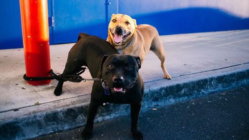 Собачьи фекалии на улицах города: Не только неэстетично, но и очень опасно!