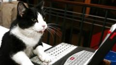 Привокзальная кошка помогла продать тройной тираж газеты одним своим видом