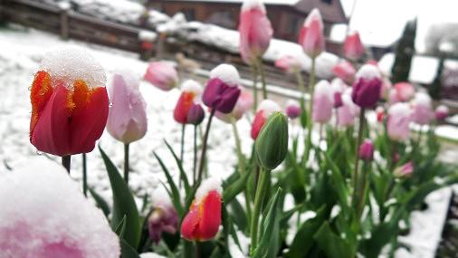 Думаете, весна пришла? В ночь на 1 мая возможны новые рекорды холода!