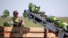 Латвийским крестьянам требуются гастарбайтеры на сезонные работы