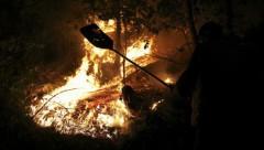 За неделю в Латвии выгорело 48,14 гектара леса