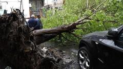 Ураган в Москве унес жизни 11 человек