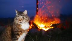Где пожарить шашлык, если на Лиго вы остались в городе