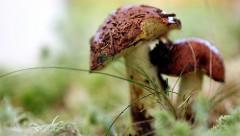 Грибной переполох: есть ли в этом году грибы или нет?
