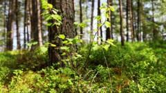 Это выходит за рамки: в лесу, где был найден Иван, происходят странные вещи
