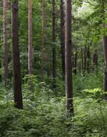 Пропавшая в лесу в Мадоне женщина найдена мертвой