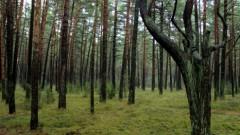 Хорошо, что все обошлось: грибники надолго запомнят этот поход в лес