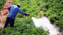 Соцсети изумлены: Фермер учит, как нужно воровать с его поля