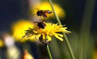Детектив в Лиепае: «Банда воров ульев совсем обнаглела, ведь украсть пчел не так просто»