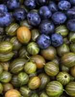 Десять хозяйств Латвии, где можно самим собирать ягоды