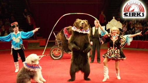 В Екатеринбург едет медвежий цирк.