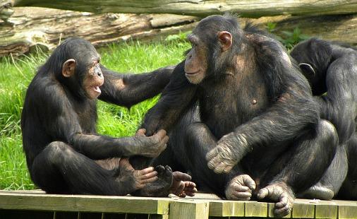 порно с обезьяной фото: