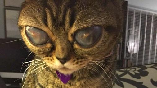 Картинки по запросу Кошка-пришелец