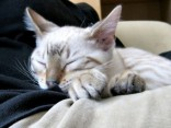 Почему кошки обожают спать рядом со своими хозяевами