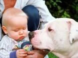 Видео-умора: требующий внимания пес притворился ребенком