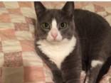 Хит Сети: Ревнивый кот влез на фото нового питомца